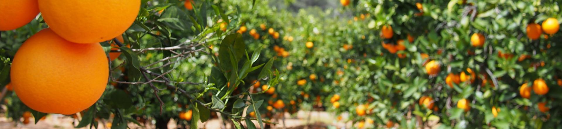 naranjas naturverd
